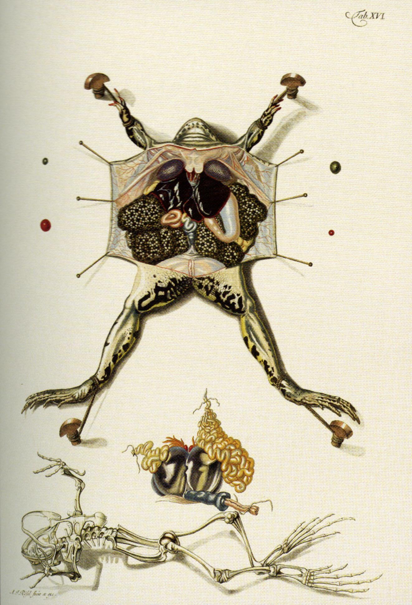 Frog Lab Natural History