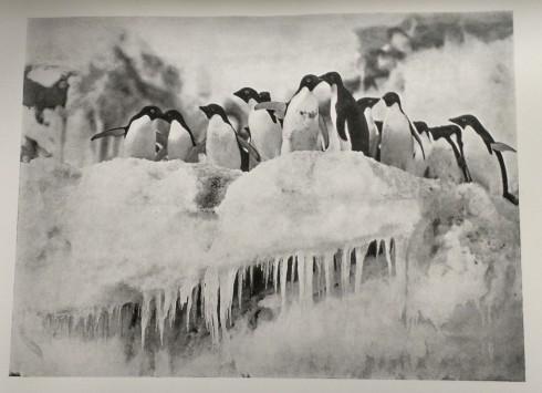penguin-7