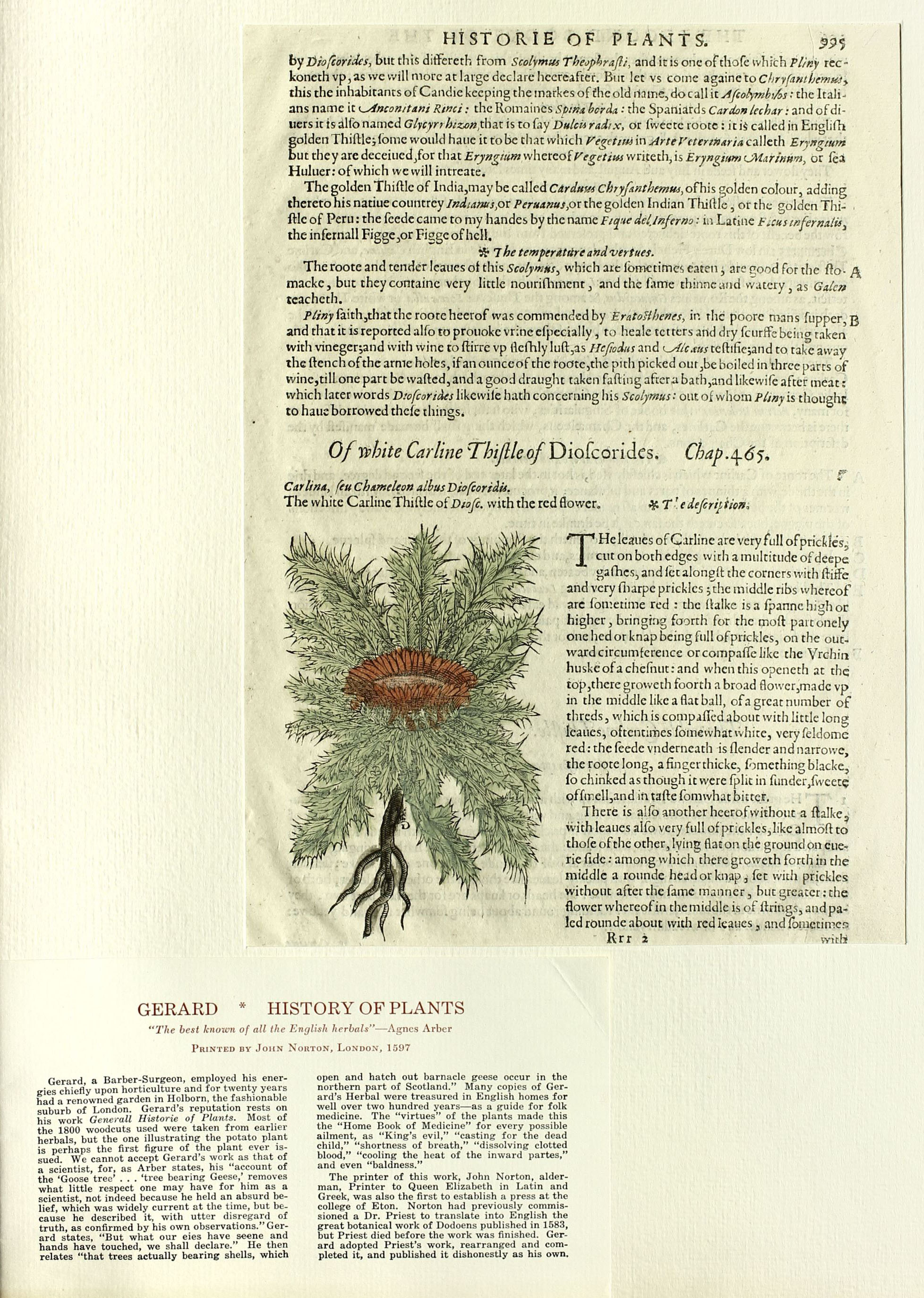 Image of leaf with explanatory note